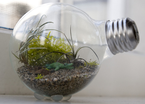 minijardim dentro de uma lâmpada