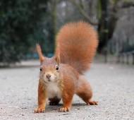 vídeo com esquilo