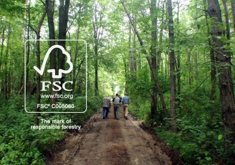 floresta gerida de modo sustentável