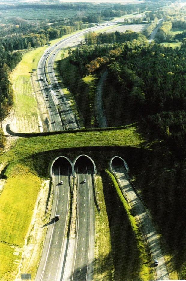 ponte para fauna