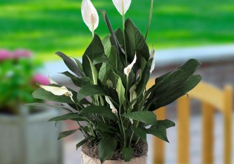 a NASA diz que as plantas filtram o ar dentro de casa