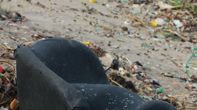 lixo atirado ao mar atinge costa portuguesa