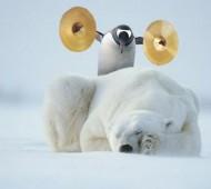 urso polar vive no ártico, no polo norte