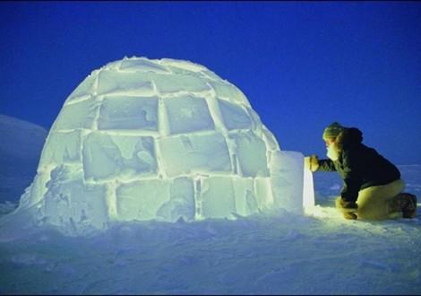 iglus são abrigo feito de neve