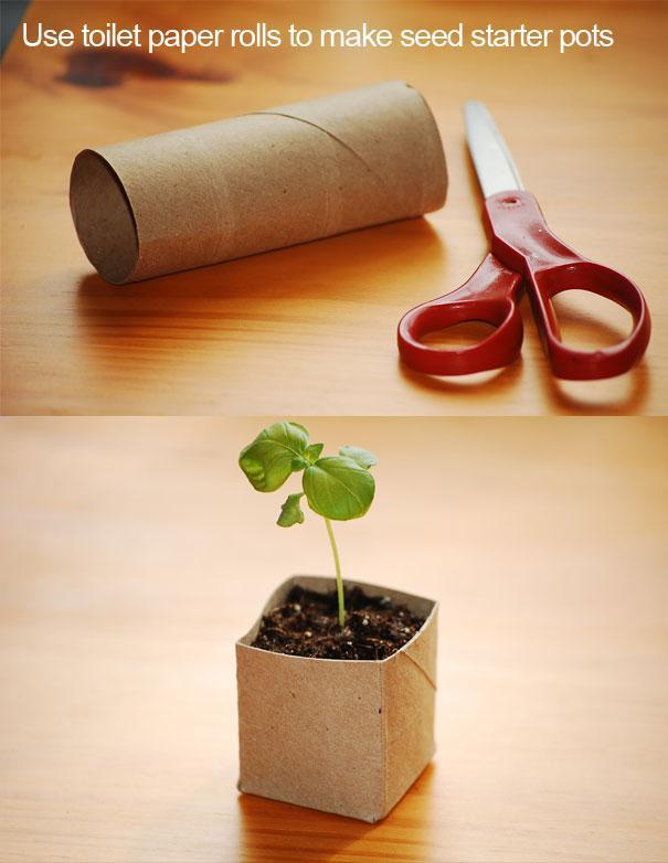 transformar rolos de papel higiénico em vasos para plantas