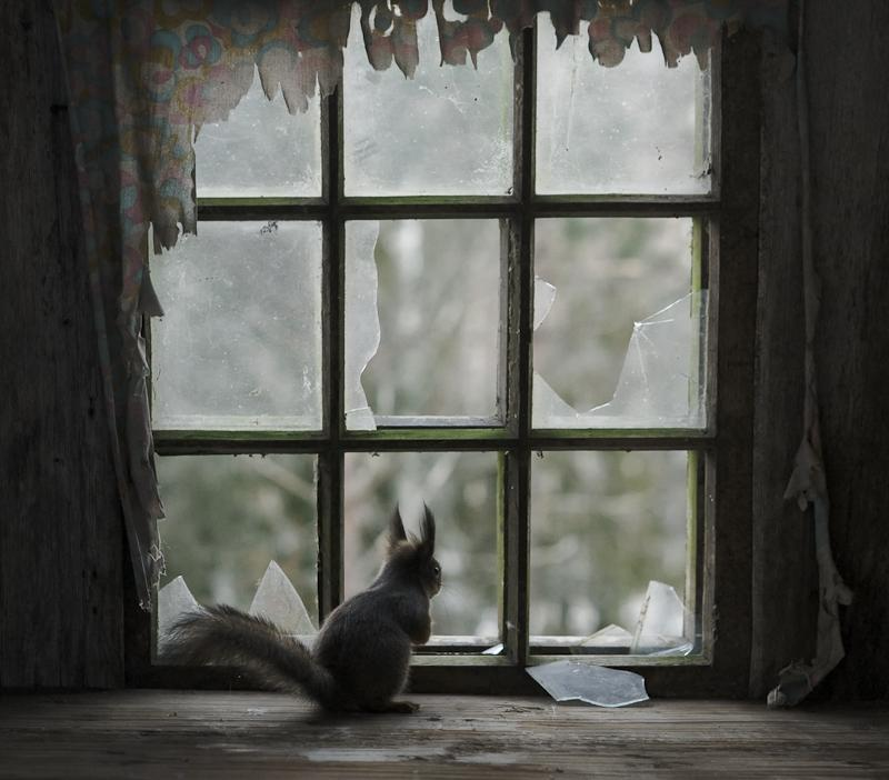 animais ocupam casa abandonada
