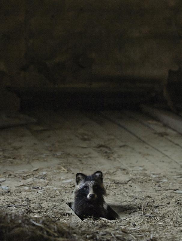 casa abandonada é ocupada com animais selvagens