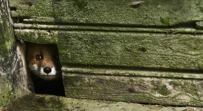 casas abandonadas ocupadas por animais selvagens