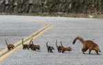 animais atravessam a estrada e correm perigo de vida