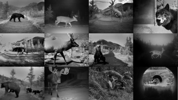 animais, estradas