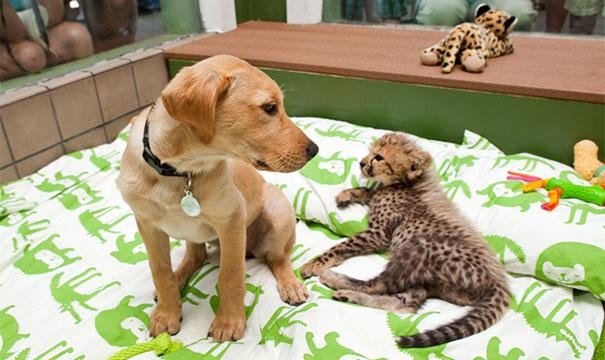 cão e chita