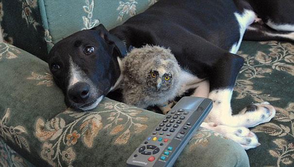 cão e coruja