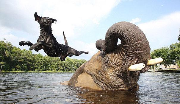 Bolhas o elefante e bella o labrador