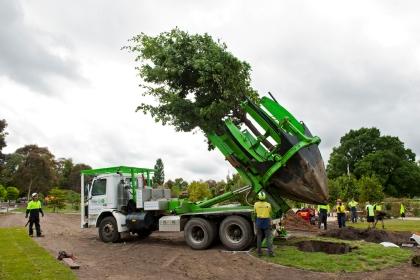 tree spade é a tecnica que evita que árvores sejam cortadas