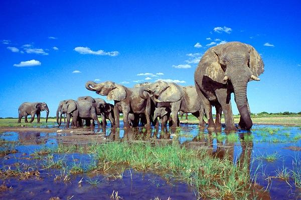 Etosha-National-Park