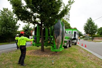 camião-árvore-replantação