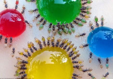 O que fazer quando se tem uma infestação de formigas.