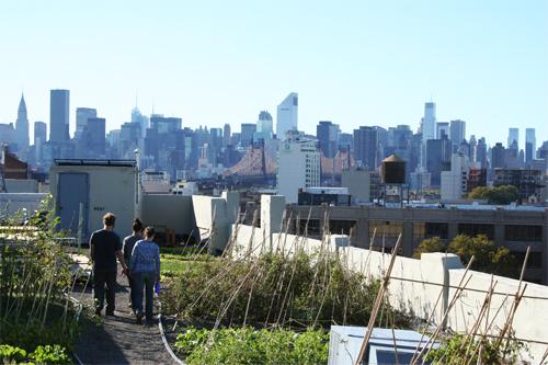Hortas nos telhados de Nova York.