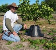 tree t-pee árvore poupanca água