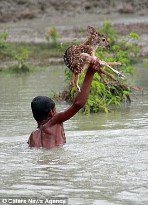 veado-bangladesh-cheias-heroi