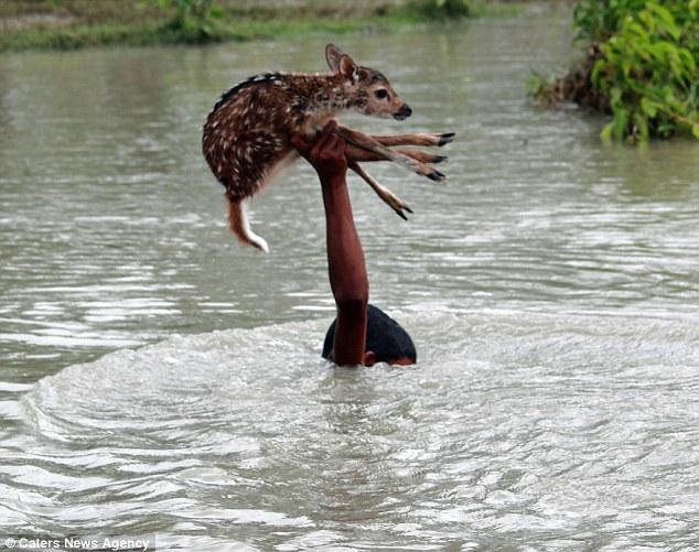 bebé-bangladesh-afogado-rapaz