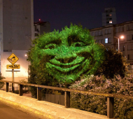 árvore que sente