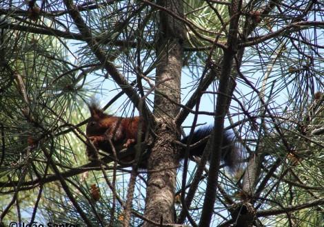 Esquilo a alimentar-se no topo de uma árvore