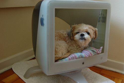 monitor de computador velho apple