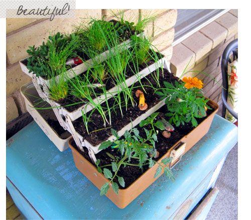 canteiro com ervas ou flores