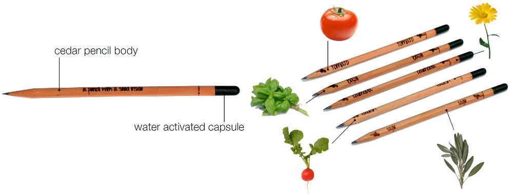 sprout flores legumes e ervas aromáticas