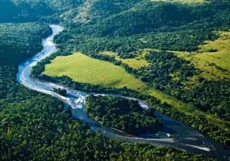 Floresta Brasil