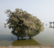 árvores com teias de aranha