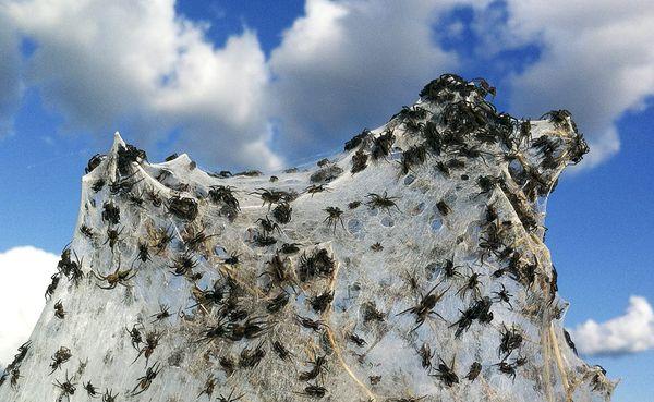 spider-webs-australia-floods-Daniel Munoz Reuters
