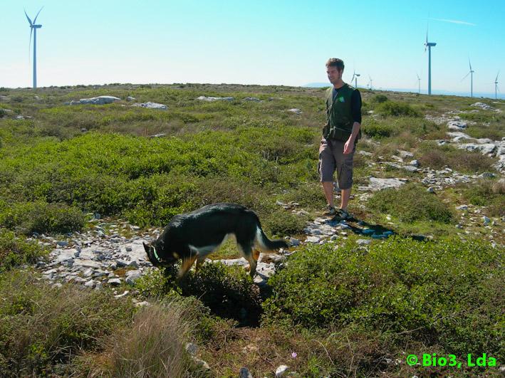 Cao-Biologo-em-acao-Biologist-Dog-in-action