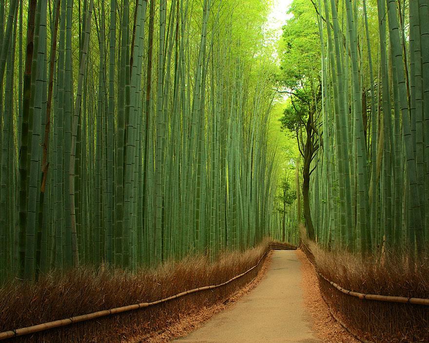 trilho de bambu japão