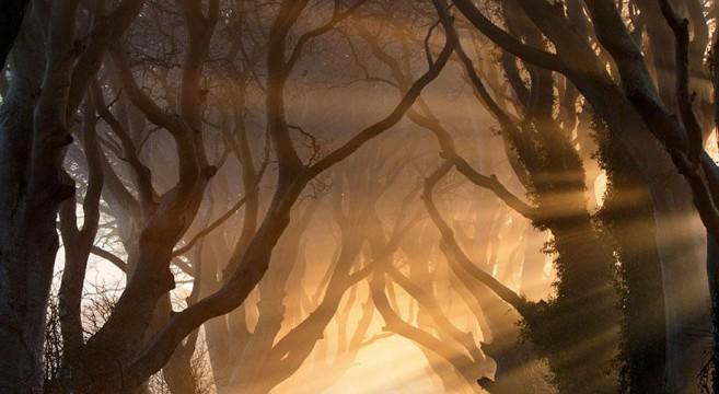 túneis de árvores