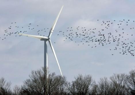 aves turbina eólica Dave ChidleyCanadian Press