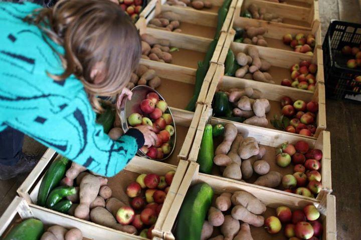 fruta feia cabaz semanal