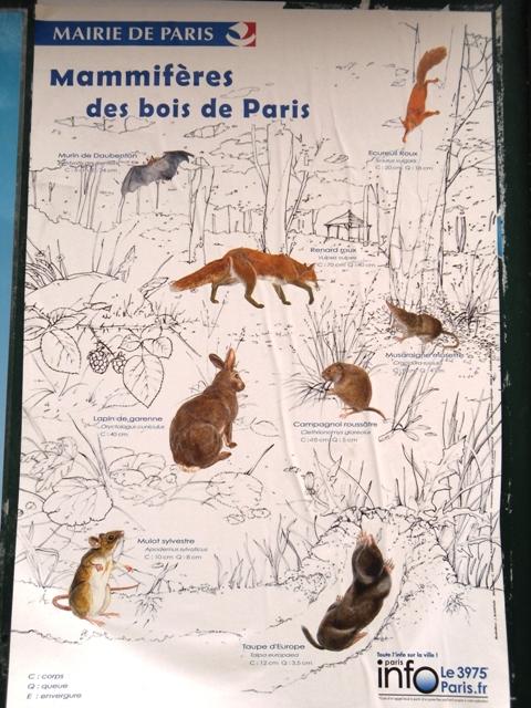 mamíferos jardins paris parques animais