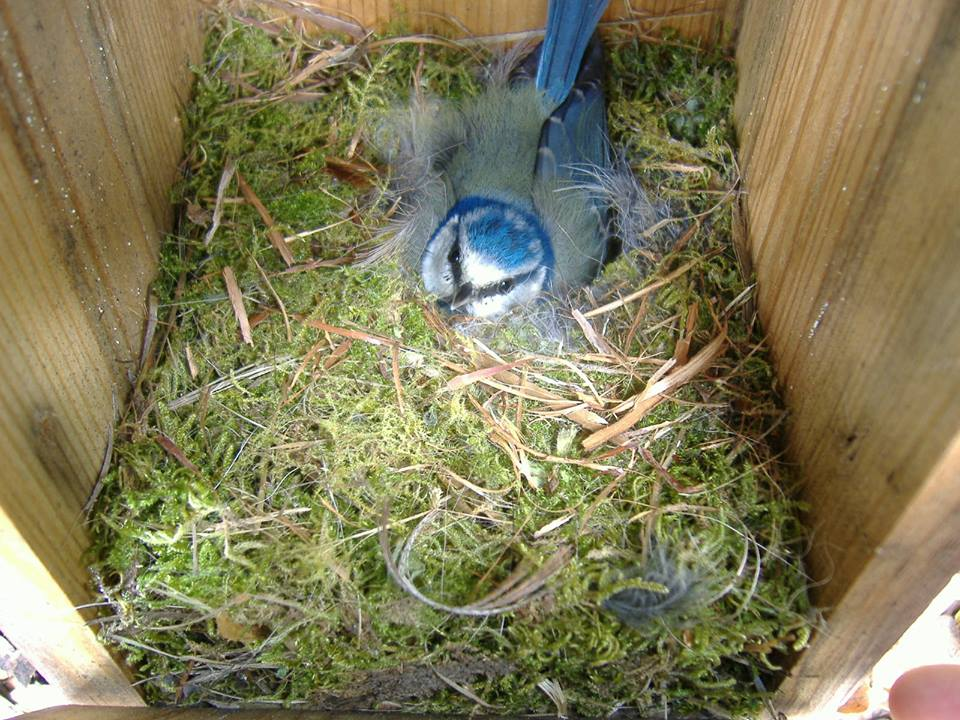 natur eco chapim caixa abrigo ninho