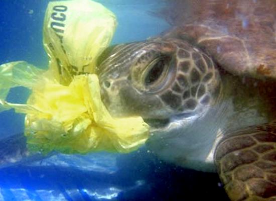tartaruga saco plástico sacola mar