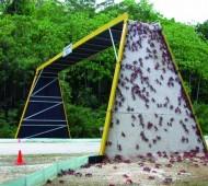 caranguejo-tunel ponte migração