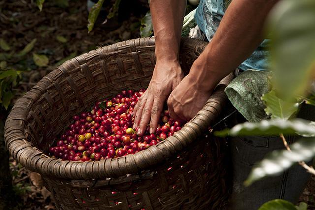 ecolaboration costa-rica la-giorgia café