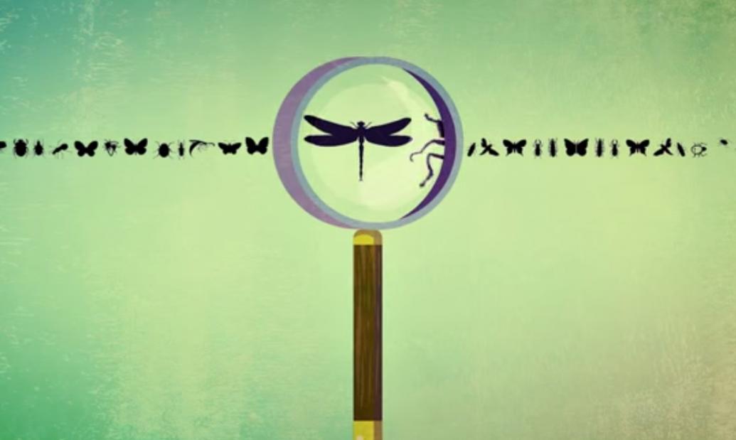 lupa biodiversidade insetos animais