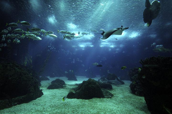 peixes ocenário