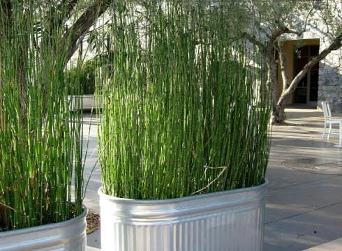 quintal vaso plantas privacidade