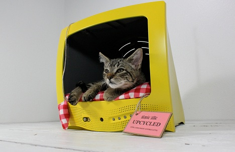 atomic-attic-upcycled-pet-bed-television-tv-gato-televisão cama