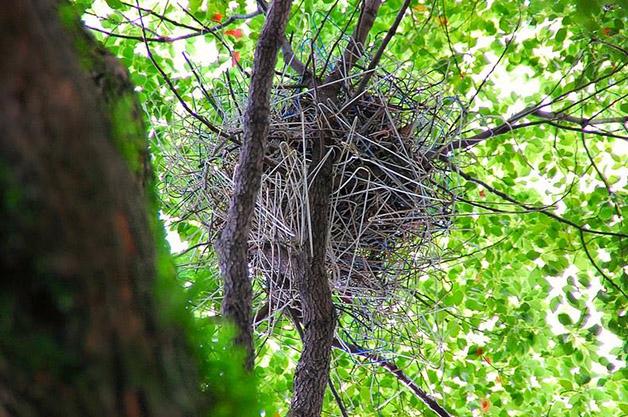 crow-nest-hanger-ninho corvo cruzeta