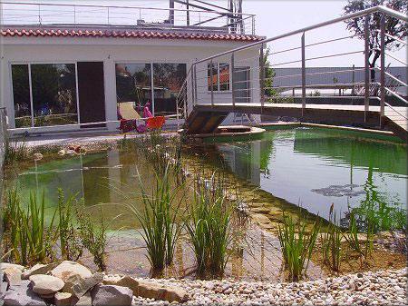 piscina biológica plantas