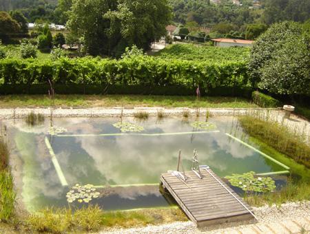 piscina natural ecológica plantas